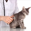 Ветеринарные клиники в Плесецке